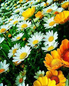 I fiori e i suoi colori. #beautiful #bloom #blooms #blossom #botanical #floral #florals #flower #flowermagic #floweroftheday #flowerporn #flowers #flowerslovers #flowersofinstagram #flowerstagram #flowerstyles_gf #green #insta_pick_blossom #instablooms #love #nature #petal #petals #plants #pretty #rose #sopretty #spring #summer #tagsforlikes http://gelinshop.com/ipost/1518089480400513868/?code=BURVlbYh6tM