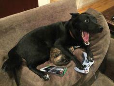 dog-protecting-cat-internet-meme-14__880