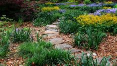 Pathways, Stepping Stones, Outdoor Decor, Plants, Stair Risers, Paths, Plant, Walking Paths, Planets