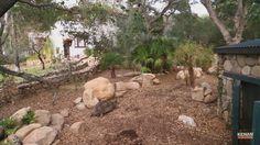 Tortoise Enclosure, Tortoises, Turtles, Aquarium, Patio, Outdoor Decor, Ideas, Ranch, Goldfish Bowl