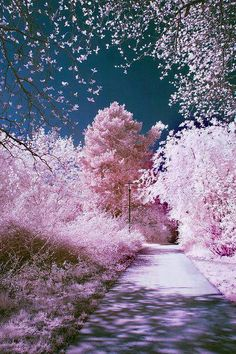 Outdoor park-like walkway wit pink/purple undertones and dark sky. -all is pink