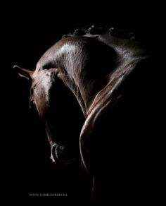 So I asked you to vote in my stories - for a series of three 'normal' horse portraits or three more fine-art photos. All The Pretty Horses, Beautiful Horses, Animals Beautiful, Horse Photos, Horse Pictures, Equine Photography, Animal Photography, Cavalo Wallpaper, Horse Artwork