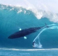 whale in wave with surfer