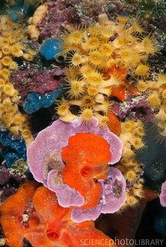 mediterranean sea coral reefs - Google Search