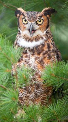Owl <3 ******