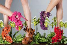 Jan Jansen orchid collection 2012