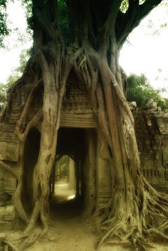 Journey into the Kingdom of Cambodia, where nature seeks to protect hidden treasures found deep within it's grasp... ℋ.ℱ. Oh The Places You'll Go, Places Around The World, Places To Travel, Places To Visit, Wonderful Places, Beautiful Places, Beautiful World, Amazing Places On Earth, Romantic Travel