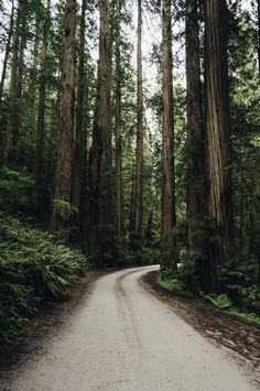 James Unkov - The Deep Dark Redwoods National and State Parks...