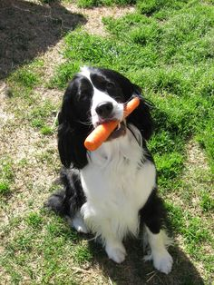 Sweet Magnolias Farm... This is our sweet Flossie. She loves carrots.