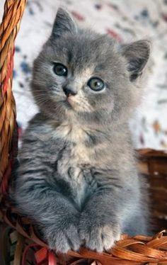Adorable Grey White Kitten