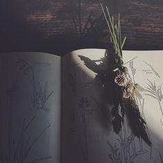 bouquet. ++ condominiumcote