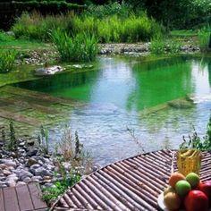 piscine naturelle, bassin avec pierres et plantes, table en teck