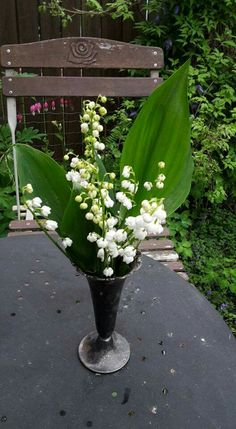 Lily of valleys from my garden