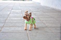"""Купить Платье для собачки """"Леди"""" - салатовый, маленькая собачка, шерсть 100%, стразы, платье для собачки"""