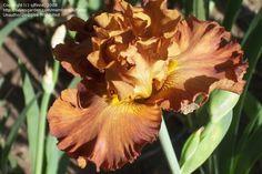 Výsledek obrázku pro rembrandt magic iris