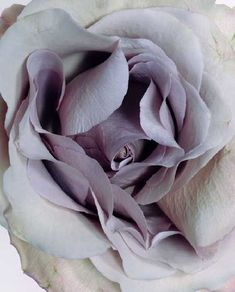 Soothing shades of lilac for a Monday morning!