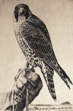 falcon illustration - Google Search