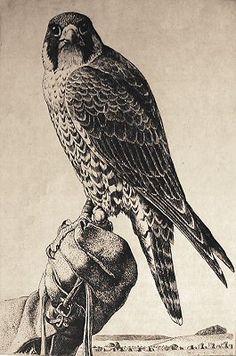 falcon illustration - Google Search
