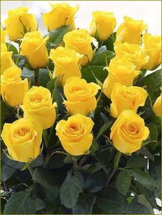 88 Best Roses Images On Pinterest Beautiful Flowers Planting