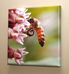 Honey Bee 10 x 10 Wrapped Canvas. This 10 x 10 inch handmade gallery-wrapped canvas art piece is a stunning close-up macro photograph of a honey bee gathering nectar from milkweed flowers. You will never be able to get close enough to a flying honey bee to see it in such exquisite detail, nor would you want to! This is perfect for any nature lover or in a kid's or teen room. The canvas is coated with a professional-grade satin finish varnish that protects against scratches, UV light and...