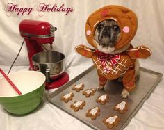 Figure out additional info on funny pugs. Look at our web site. Pugs Dressed Up, Pugs In Costume, Costumes, Pug Christmas, Baby Pugs, Pug Puppies, Cutest Thing Ever, Pug Love, Dog Memes