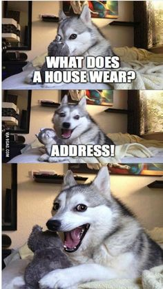 See what he did there? Ha ha... #funny #punny #dog