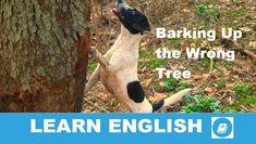Angol kifejezések egy percben videó lecke. Nézzük meg, mit jelent ez az angol kifejezés: Barking up the Wrong Tree , és hogyan használjuk a hétköznapi beszédben.