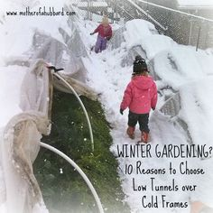 In my last post, I shared with you how it's desiccation, not really cold temperatures per se, that is most damaging to cold-tolerant plants. While it's true that cold frames and low tunnels provide...