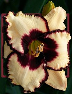 Daylily Garden Archives - Page 4 of 10 - My Gardening Today