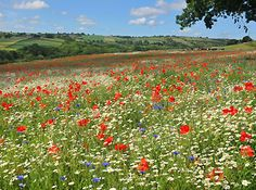 the other world: wild flower meadow. Seems to go on forever.