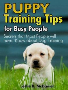 Puppy Training Tips for Busy People : Secrets that Most People will never Know about Dog Training – Special Edition Puppy Training Tips, Training Your Dog, Training Pads, Potty Training, Training Classes, Training Videos, Leash Training, Training School, Training Schedule