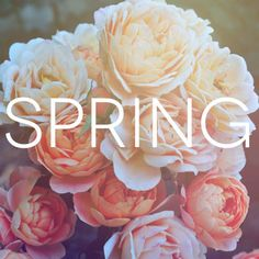 Spring where are you??