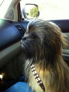 Silly Chewbacca Dog! I honestly didn't have a board for this picture but he's so stinking cute!  I just want to squeeze him...lol