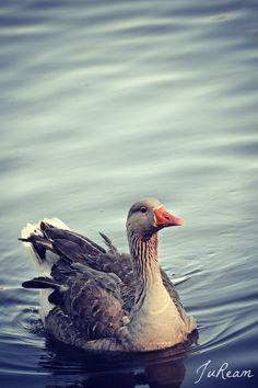 Mother Goose by JuReam.deviantart.com on @deviantART, bird, water fowl, greylag goose, graylag goose
