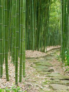 Bamboo Labyrinth, Japan