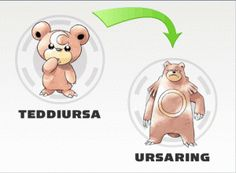 Teddiursa evolution