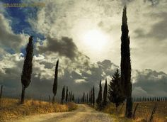 scentofapassion:  Strolling through the Val D'orcia by Graziano Ottini ~ Pienza, Sienna,Tuscany(via my-day-book)