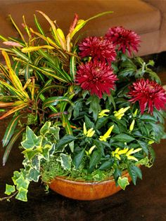 Fall Houseplant Container with recipe / Pike Nurseries