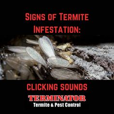 Signs Of Termites, Termite Pest Control, Termite Inspection, Insect Pest, Warning Signs, Number, Create, Blog, Blogging
