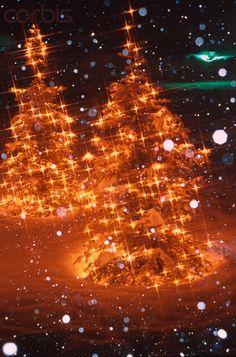 Illuminations of snow and a tree, Canada