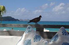 . Bird, Animals, Animales, Animaux, Birds, Animal, Birdwatching, Animais