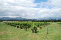 Top 25 Things to Do in Australia & New Zealand: #12. Explore Australia's wine regions http://travelblog.viator.com/top-25-things-to-do-in-australia/ #travel