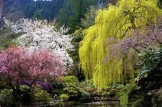 Spring Trees  in a beautiful garden, photograph by Joyce Sherwin