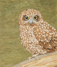 The Boobook Owl Katharine Green  available at fineartamerica.com by clicking on image.