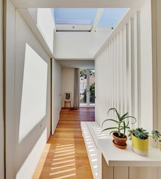Panov Scott | Centripetal House; 19th century terrace house renovation in Sydney, bringing #light into a narrow site