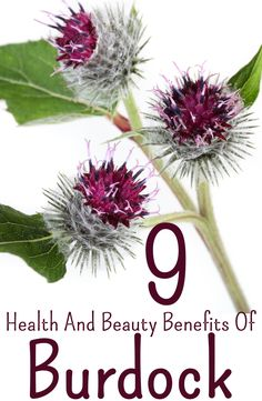 Burdock roots are widely used to treat indigestion and malnutrition disorders. Here are 9 such amazing benefits of burdock for skin, hair and health for you to know