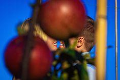 Don't sit under the apple tree with anyone else but me...  Hochzeitsfotos im Herbst. #braut #braut2018 #brautpaarfotos #Herbsthochzeit #happysmiles #hochzeitmitäpfeln #hochzeitimfreien