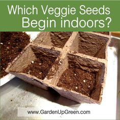 Discover which seeds You should begin indoors