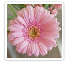 'Pink Gerbera' Sticker by ellenhenry Pink Gerbera, Pink Carnations, Framed Prints, Canvas Prints, Art Prints, Floral Photography, Bunch Of Flowers, Long Hoodie, Pale Pink