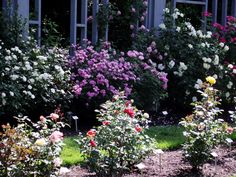 Rose garden at Inniswood Metro Gardens